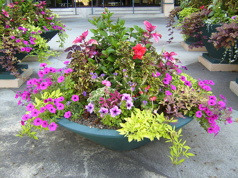 create a container garden quiet corner