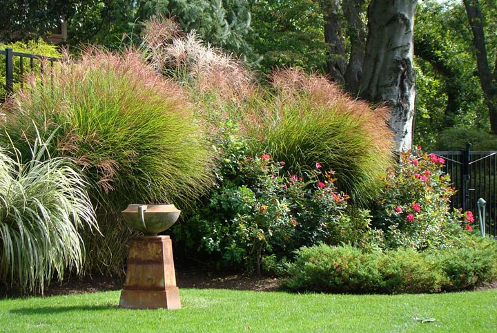 How to Grow Ornamental Grass - Quiet Corner
