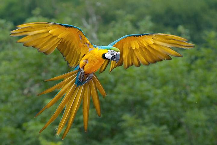 Top 5 Best Pet Birds for Beginners