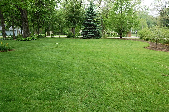 Landscaping Grass Pics : Common lawn weeds how to handle them quiet corner