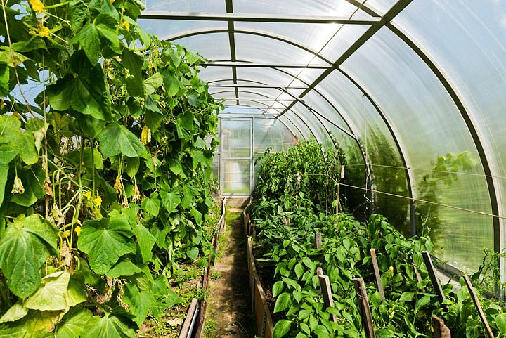 Greenhouse Gardening Benefits Quiet Corner