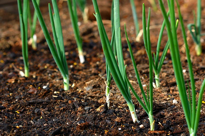 February Gardening Tips - What to Plant in February