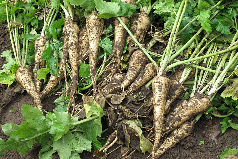 which free guide to growing vegetables 2016