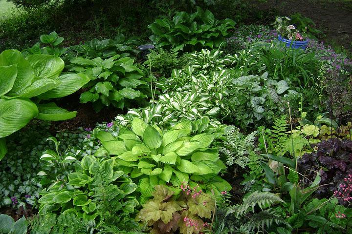 Plants That Add Structure to Shady Garden Beds - Quiet Corner