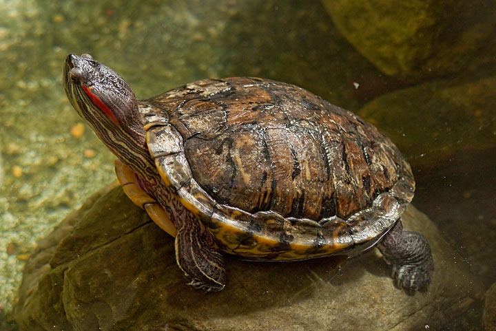 Health Issues - Monitoring Your Turtle
