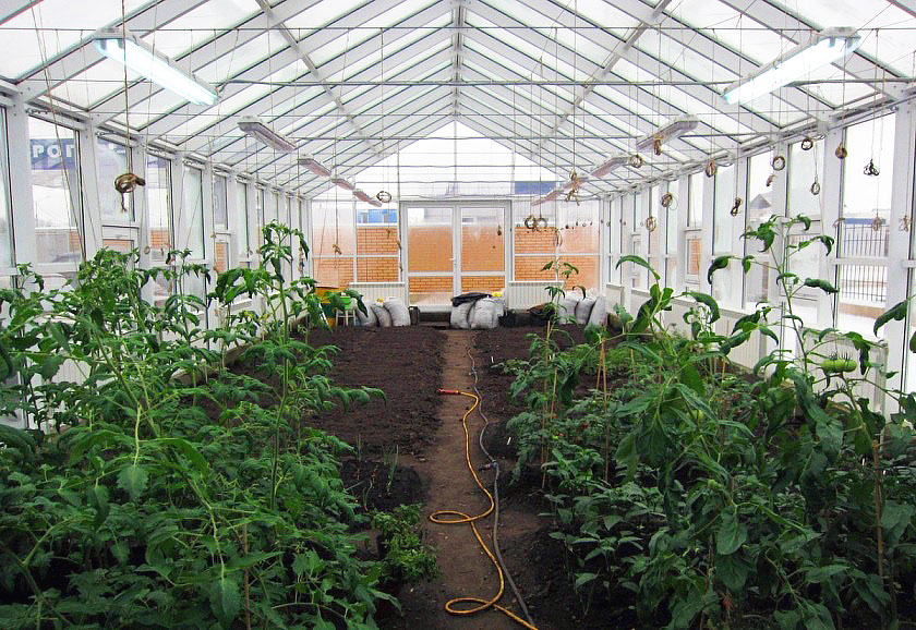 How to Keep Efficient and Effective Greenhouse