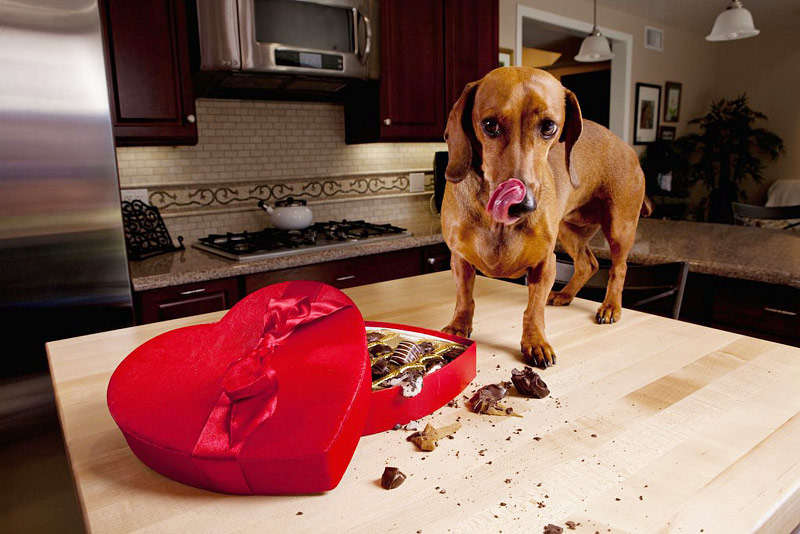 11 Safe for Dogs Human Foods