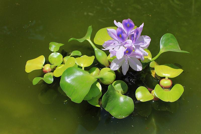 Selecting Water Garden Plants