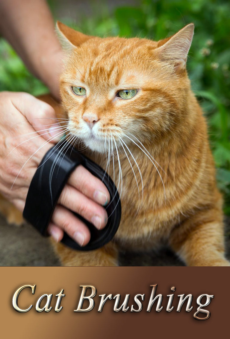How to Brush Your Cat