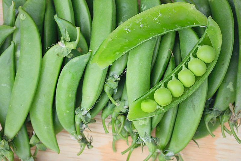 Edamame / Soya Beans - Growing Guide
