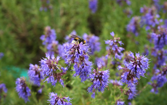 6 Medicinal Herbs to Grow at Home