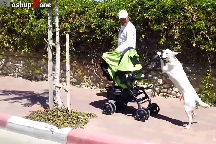 Funny Dogs Acting Like Humans Compilation