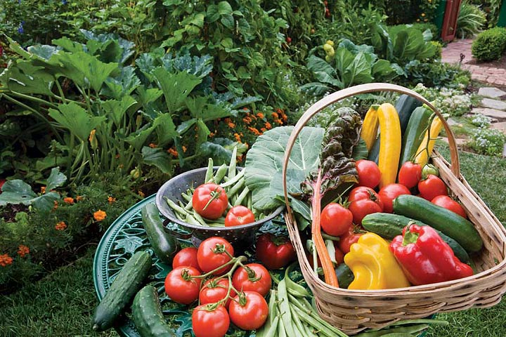Growing fruit and vegetables – July