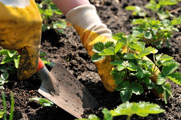 Planting Arrangements