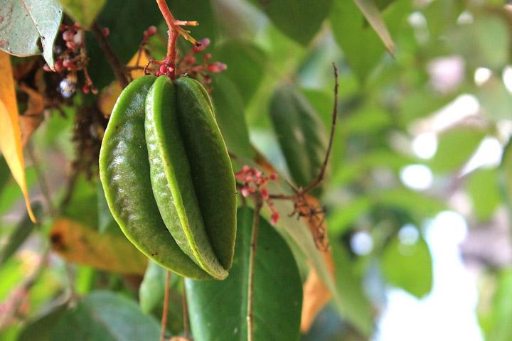 Star Fruit - Amazing Health Benefits