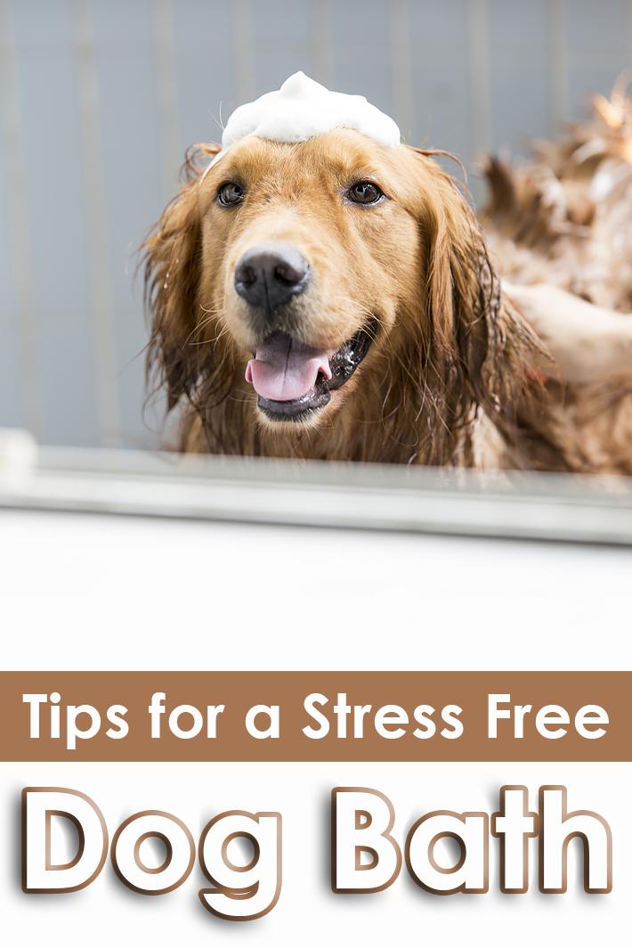 Tips for a Stress Free Dog Bath