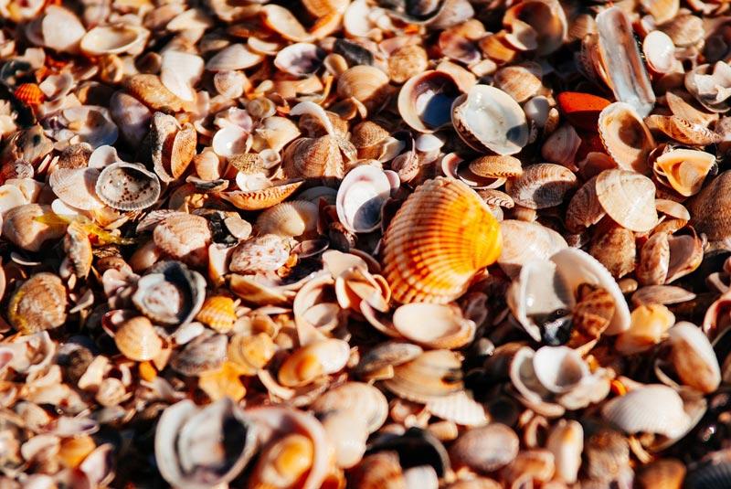 Uses for Seashells
