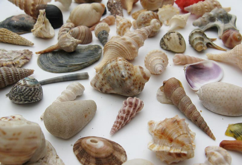 Uses for Seashells