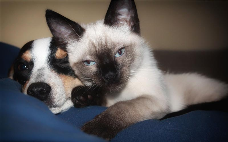 What You Need to Know About Dog and Cat Nutrition