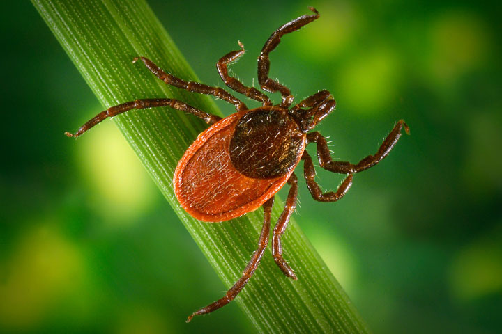Smart Tips for Avoiding Ticks This Summer