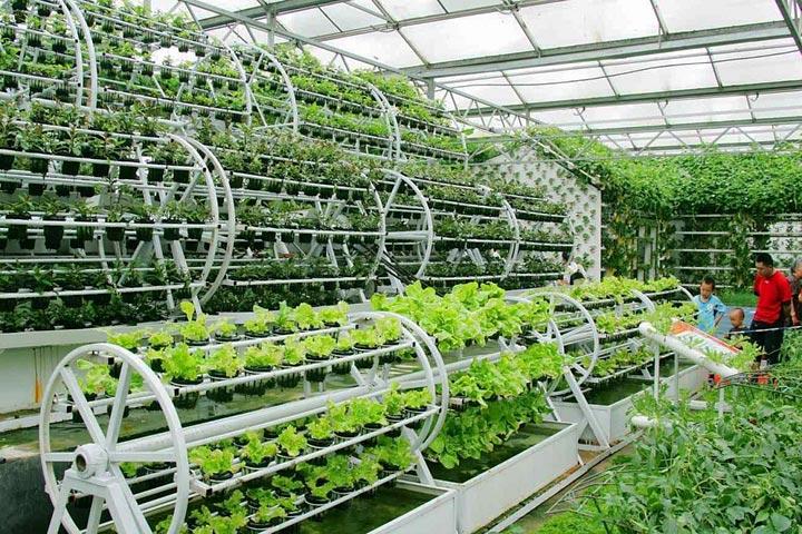 What is Aquaponics Gardening?