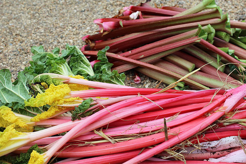 Rhubarb - Growing Guide