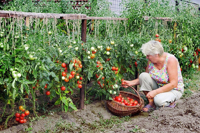 Сайт сад огород