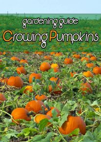 Pumpkins - Growing Guide