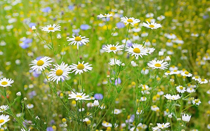 Gardening With Nature - Wildflower Garden