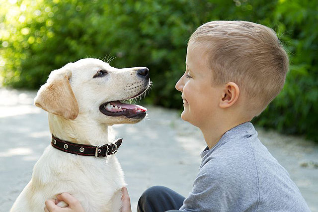 Best Dog Breeds For Children