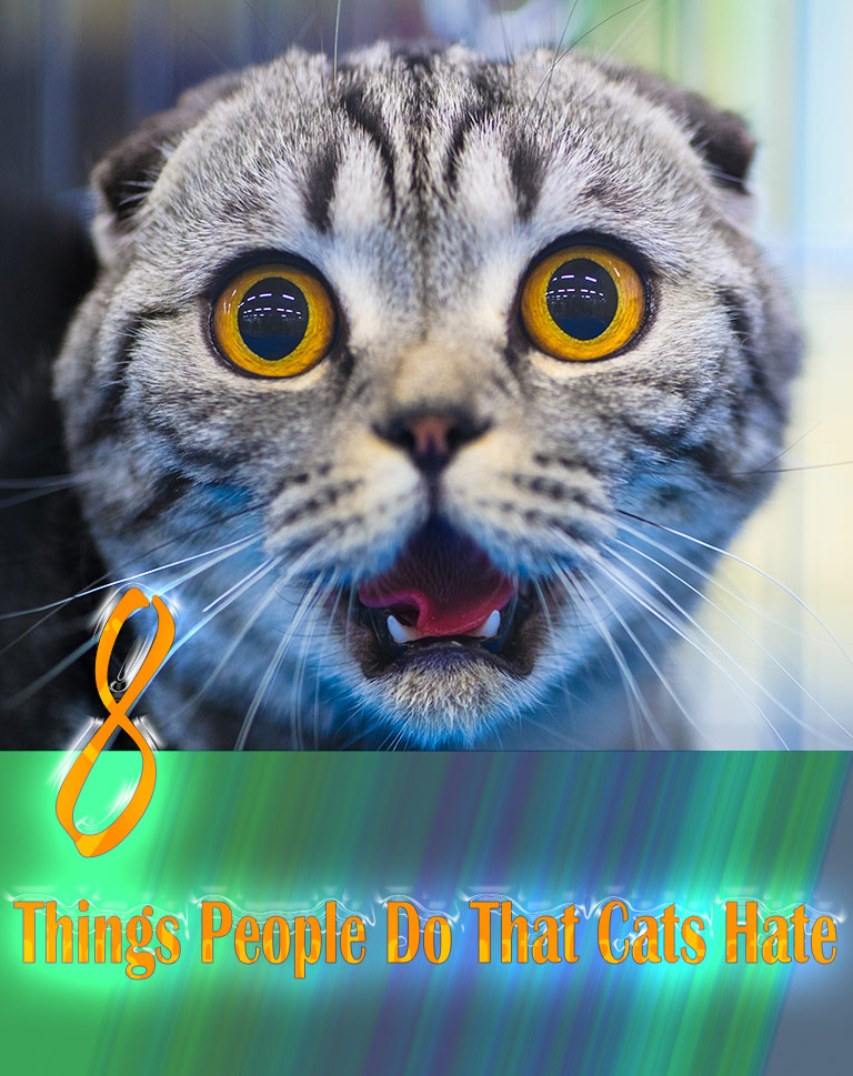 8 Things People Do That Cats Hate