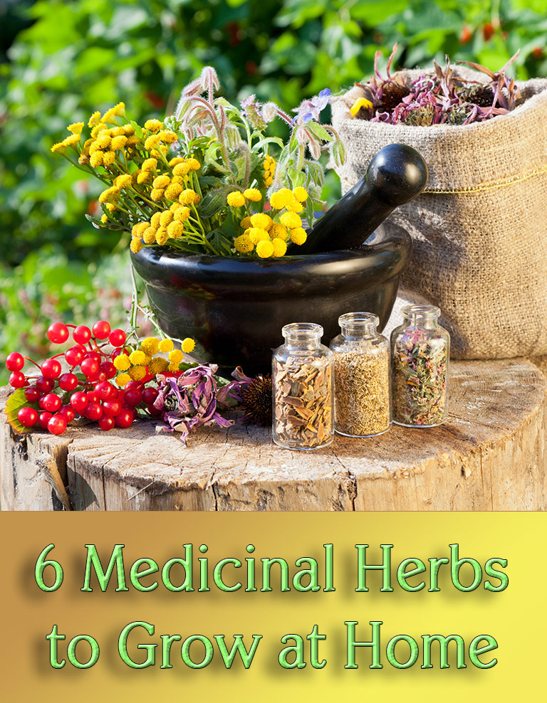 6 Medicinal Herbs to Grow at Home