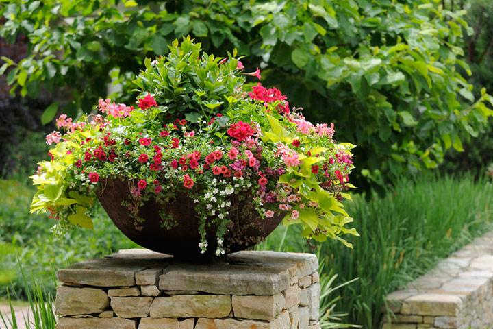 A Crash Course in Container Gardening - Quiet Corner
