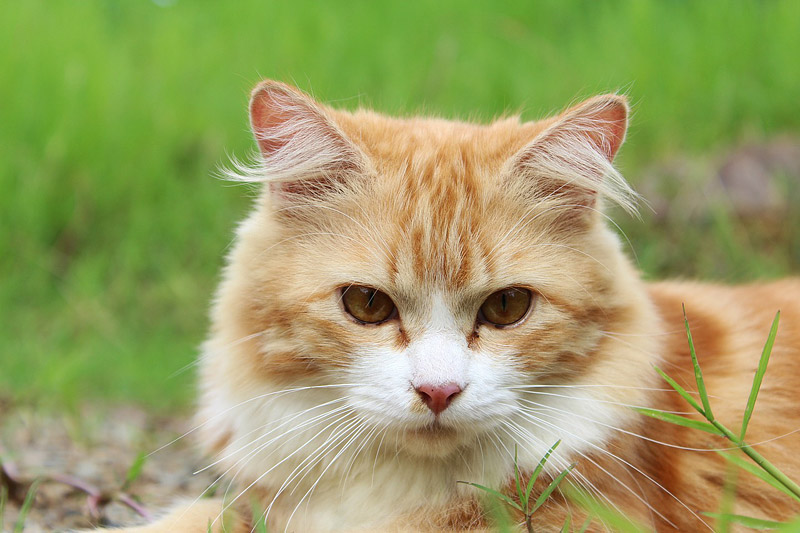 Cat Age - Help Your Cat to be Happy & Live Longer