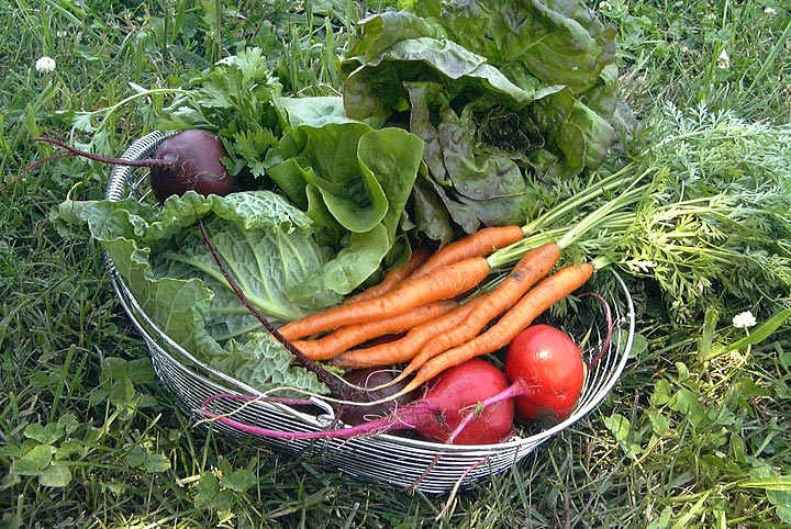 Summer vegetable harvest tips quiet corner for Summer vegetable garden