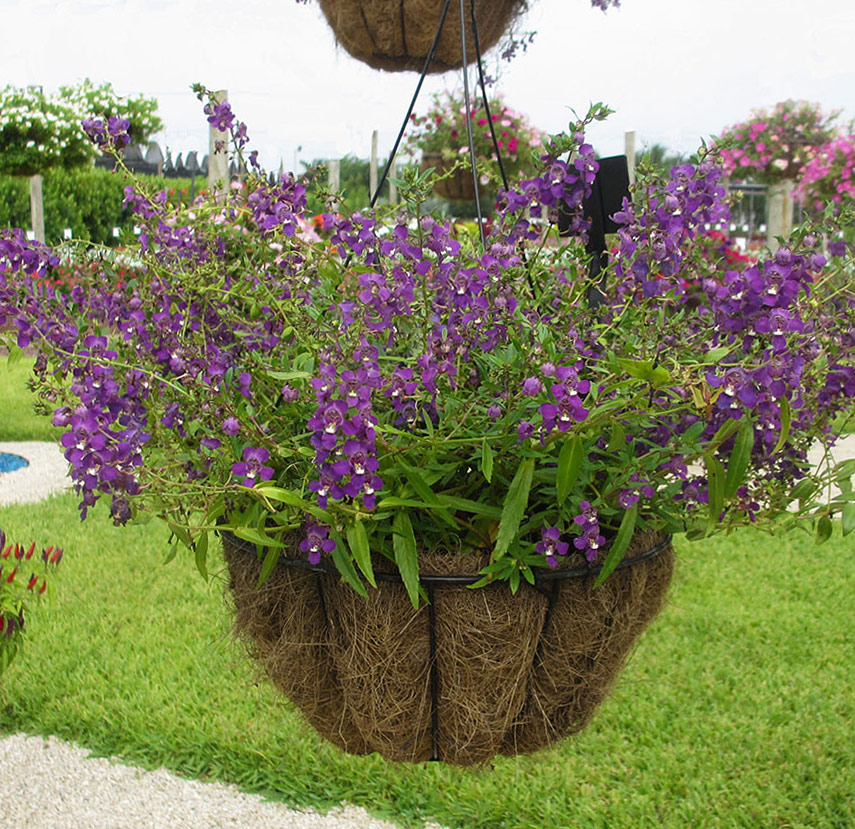 Quiet Corner Container Gardening Ideas: How To Plant Hanging Baskets And Containers
