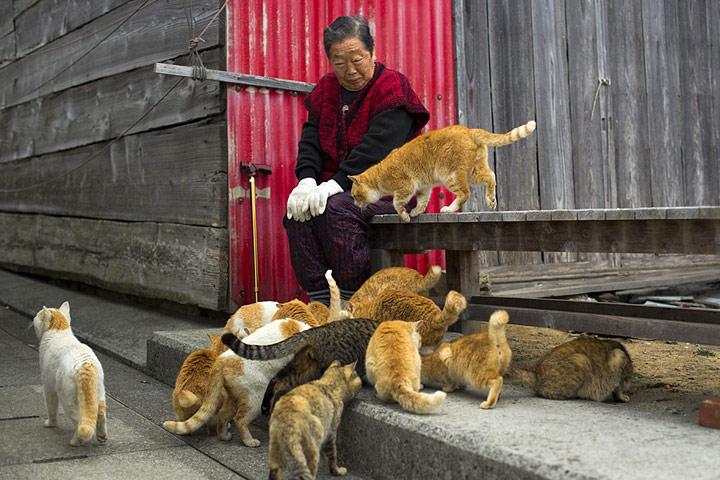 Tashirojima – Cat Island