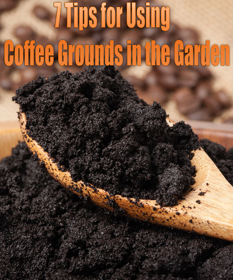 7 Tips for Using Coffee Grounds in the Garden - Quiet Corner