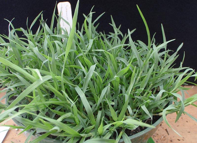 Bermuda Grass Lawn Care