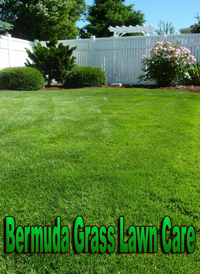 Quiet corner bermuda grass lawn care quiet corner for Yard and garden