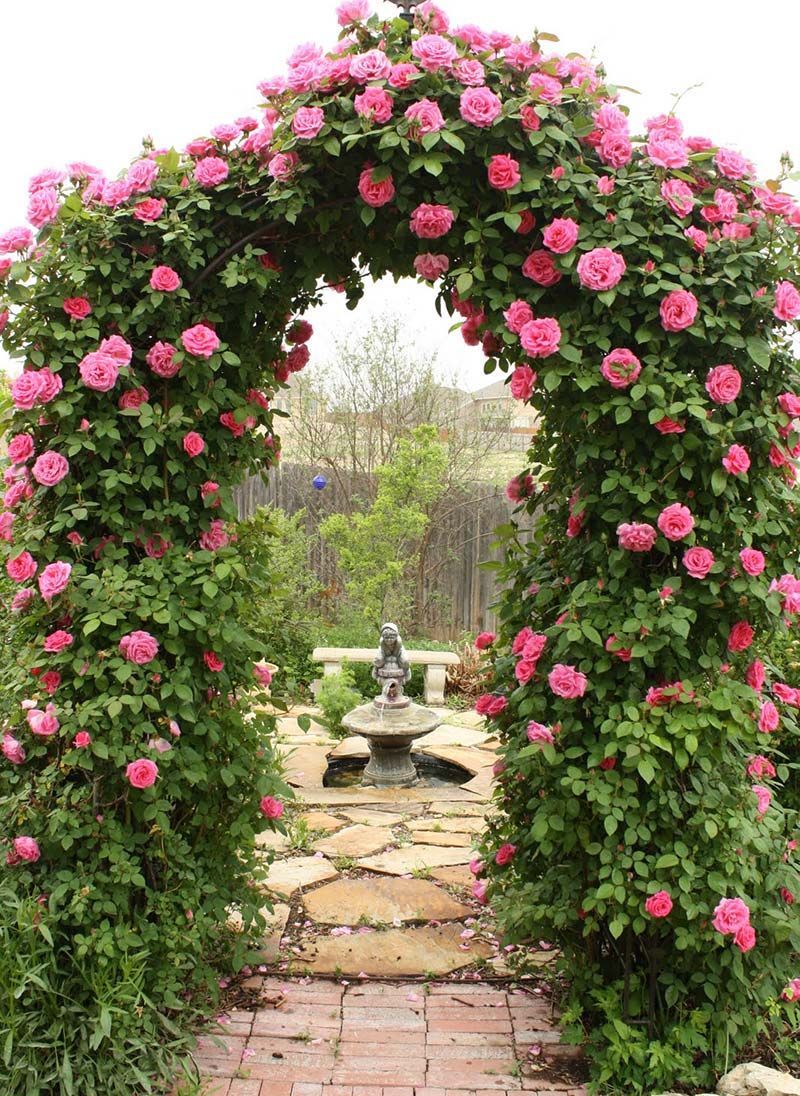 Climbing Rose Trellises