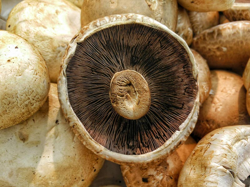 Mushrooms to Add to Your Diet