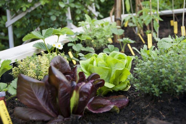 Planting Vegetables and Herbs in Summer