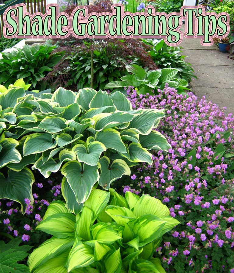 Quiet Corner Container Gardening Ideas: Shade Gardening Tips
