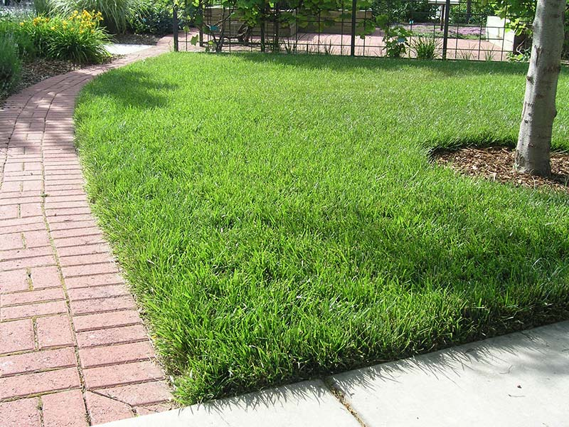 How to prepare lawn for fall quiet corner for Tall outdoor grasses