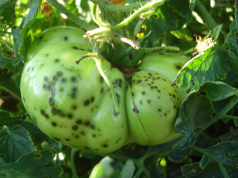 Prevention of Pests and Diseases