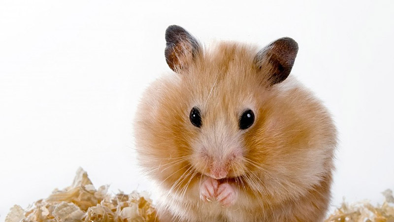 Hamster Cage - Essentials