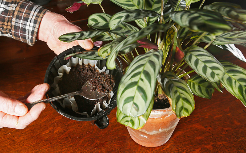 All You Need To Know About Fertilizing House Plants