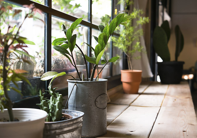 House Plants - Care Tips & Techniques