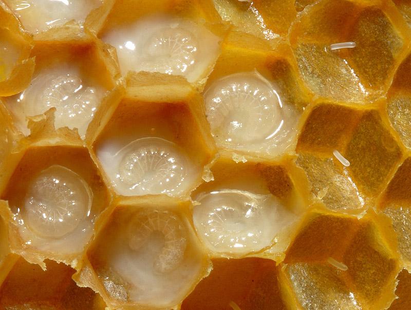 Royal Jelly - Health Benefits